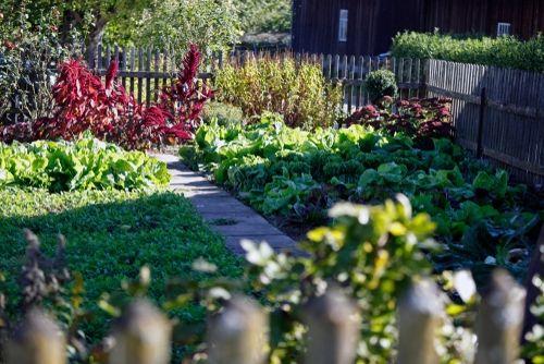 3781a7732ead Elmwood Garden Centre - Emerson's Green